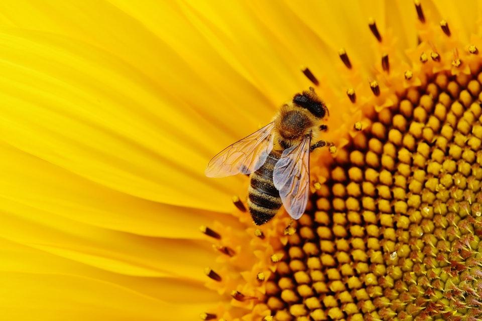 kalendarz-swiat-mws-pszczola